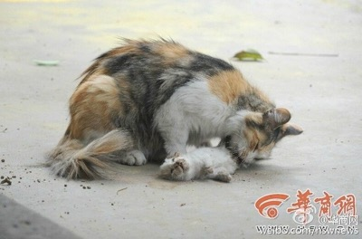 dead kittens 2