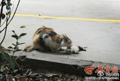 dead kittens 3