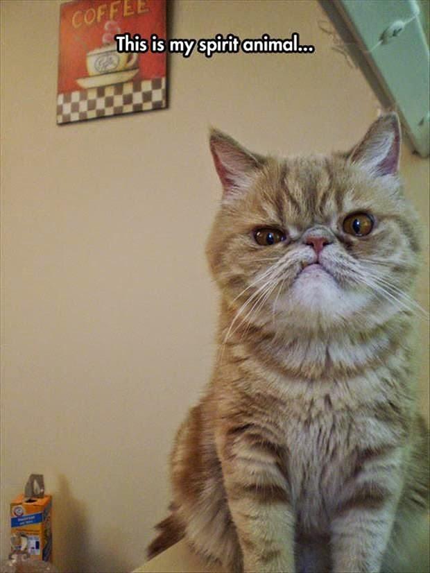 funny-spirit-animal-cat