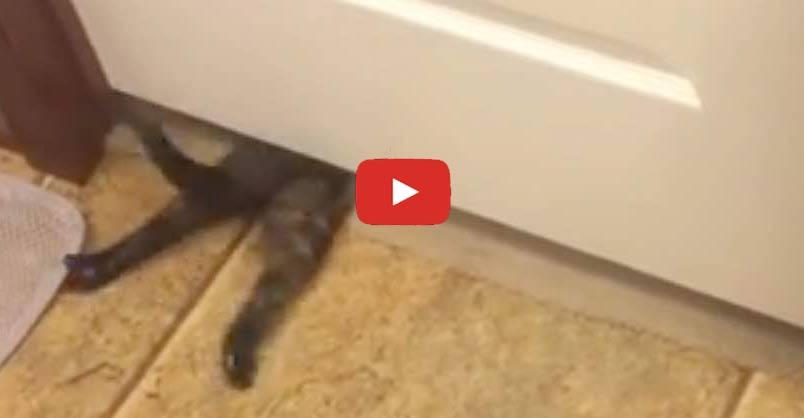 & Cute Tortie Shell Kitten Crawls Under Door - We Love Cats and Kittens