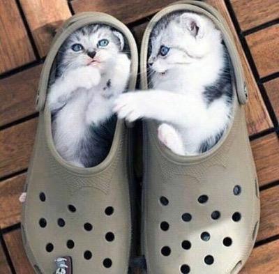 croc caption