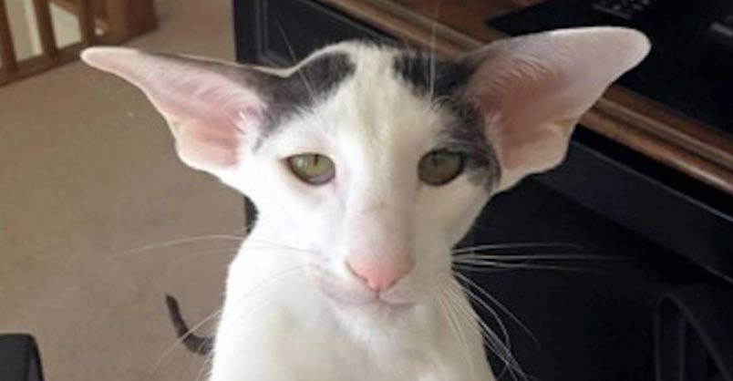 Meet Teddy Aka Dobby Cat We Love Cats And Kittens