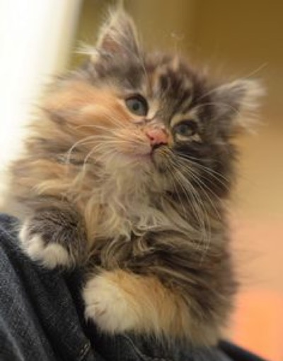 omg what a cutie