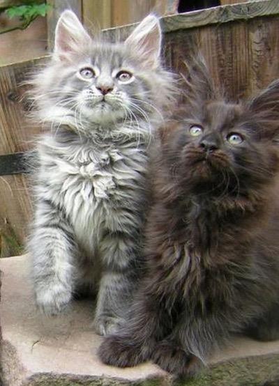 2 fluffy