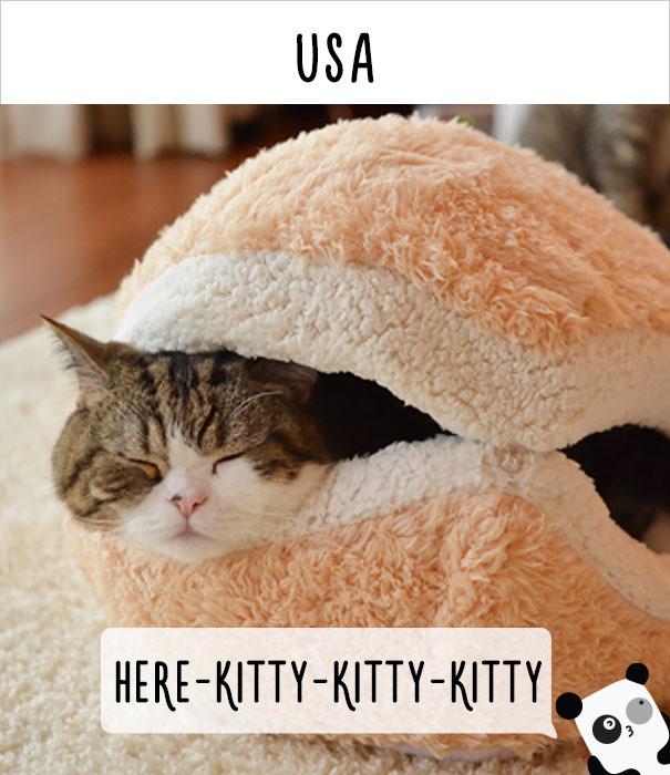 call cat 12