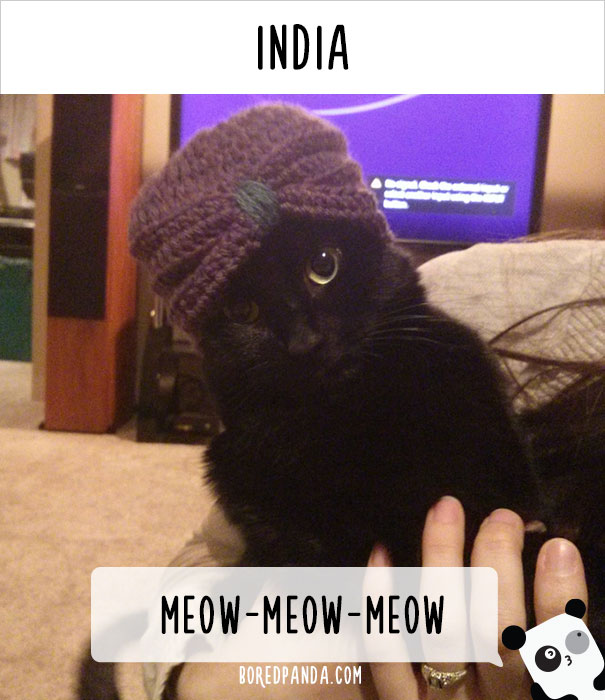 call cat 13