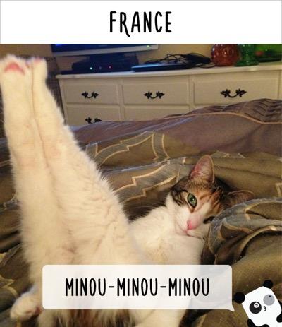 call cat 9
