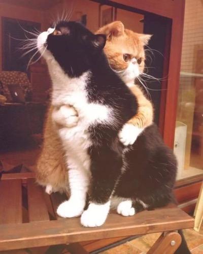 caption hug