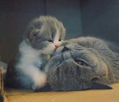 i love you mama copy