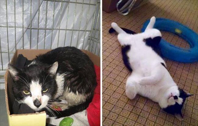 9-cats-6