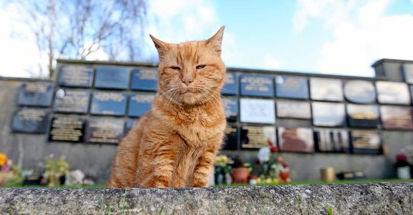 Barney the Cemetery Cat is Buried After Providing Comfort to Mourners For 20 years