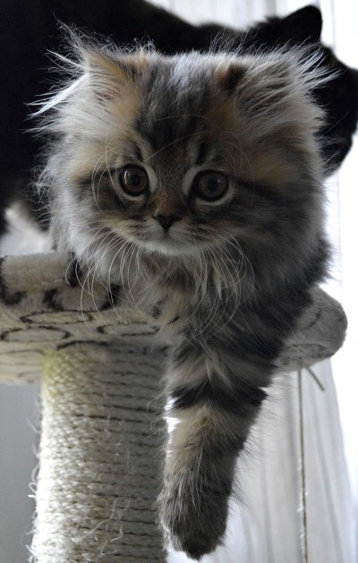 kitten-on-cat-tree