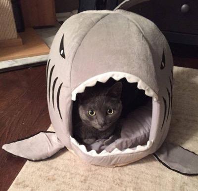 shark-bed
