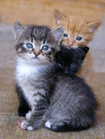 too cute or three