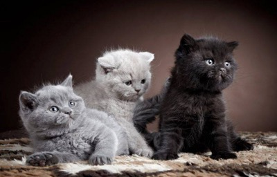 3-shades-of-grey
