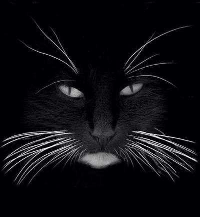 black-whiskers-1