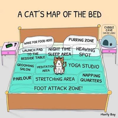 cat-map