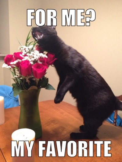 flower-favourite