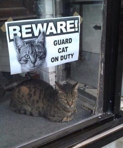 guard-cat