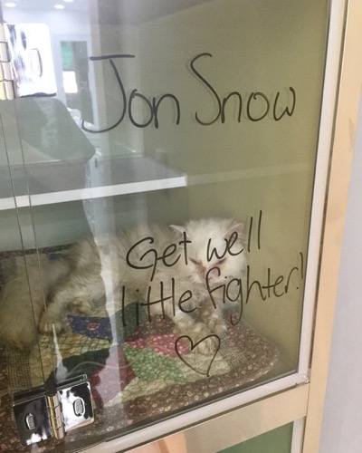 jon-snow-5