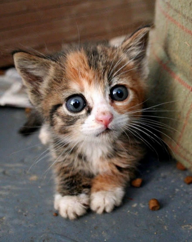 likes-cutie-1