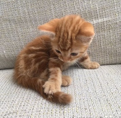 Super Cute Kitten - 7th October 2016 - We Love Cats and ...