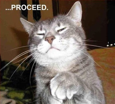 proceed-judge-cat
