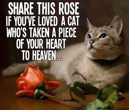share-this-rose