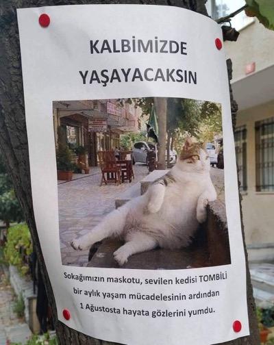 tombili-2