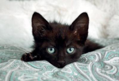 turqouise-eyes