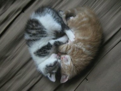 cat-heart-kitten