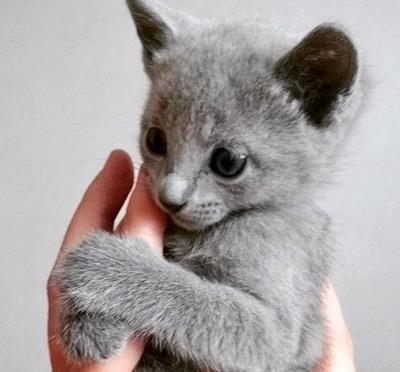 grey-finger