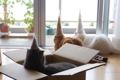 hats-10