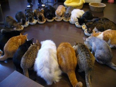lots-of-cats