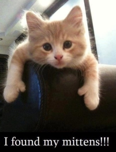 mitten-kitten