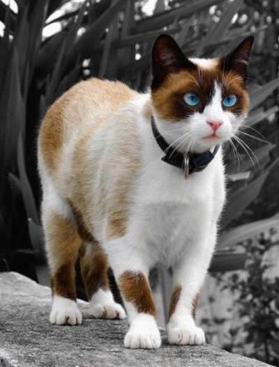 odd-markings-cat