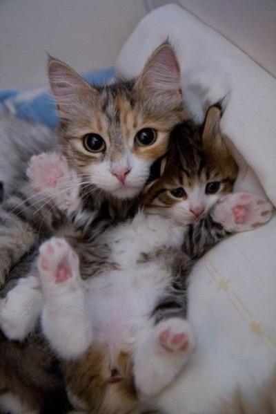 squash-kitten