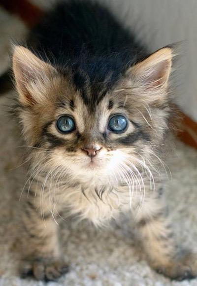 sweet-kitten