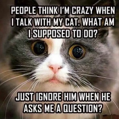 talk-with-cat-lol