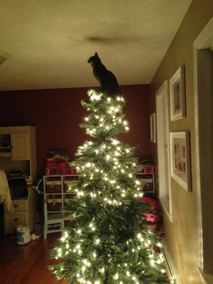 christmas-tree-top