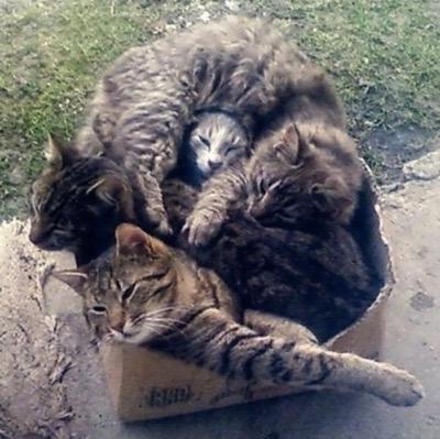 cat-pile
