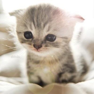 cute-kitten-18