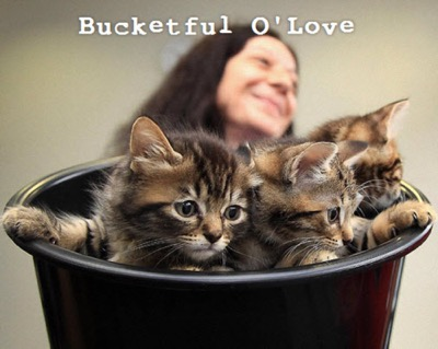kittens-in-bucket