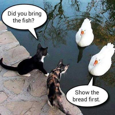 show-the-bread