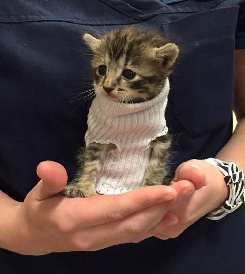sock-kitten-1