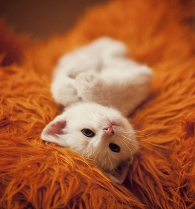 white-kitten-on-orange-rug