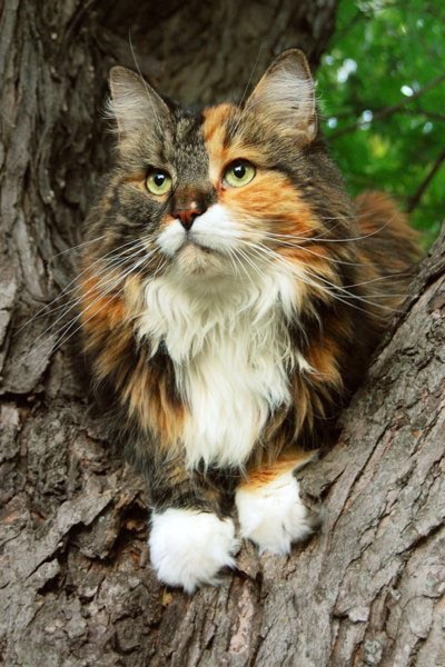 beauty in tree