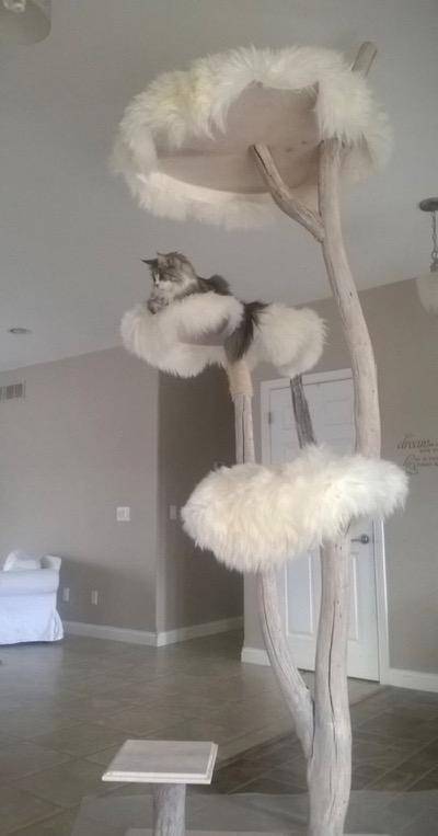 cat tree copy