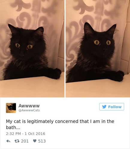 cat tweets 1