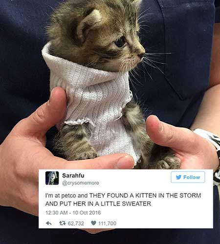cat tweets 10